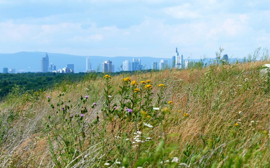 Monte_Scherbelino_mit_Skyline_©_Umweltamt_Frankfurt_am_Main,_Foto:_Stefan_Cop