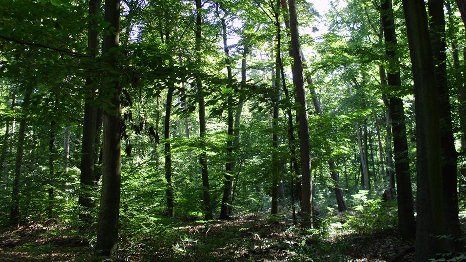 Stadtwald © Grünflächenamt