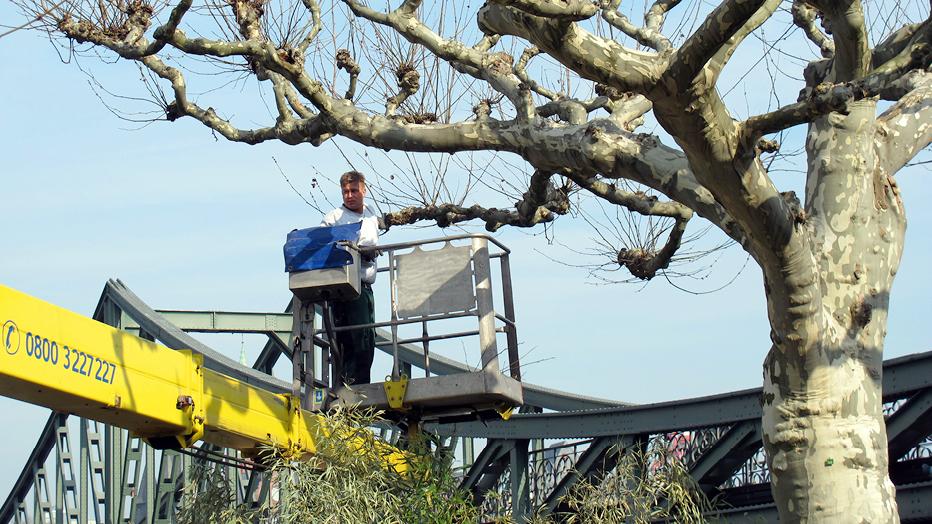 Baumkontrolle und -pflege © Grünflächenamt
