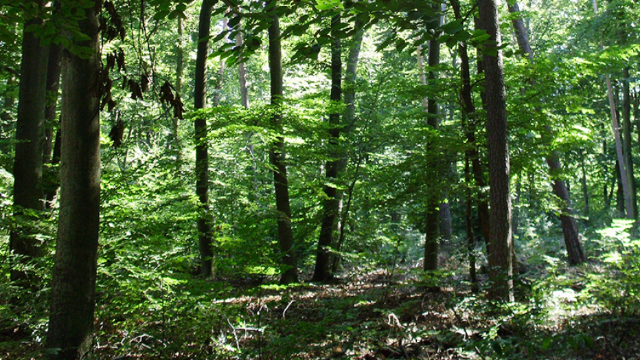 Der Frankfurter Stadtwald: © Grünflächenamt