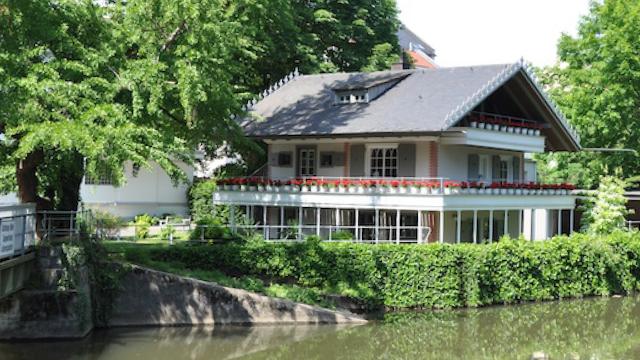 Goethe-Ginkgo am Brentanopark: © Prof. Dr. Thomas Becker