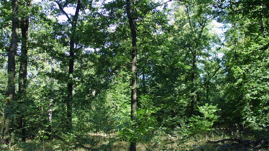 Stadtwald: © Grünflächenamt